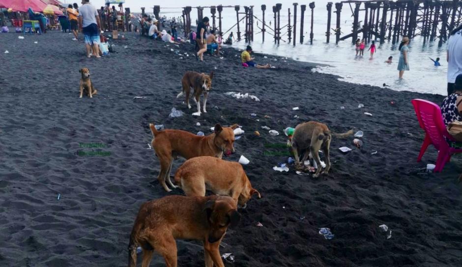 Varios perros callejeros aprovechan para comer en los desechos. (Foto: El Escuintleco)