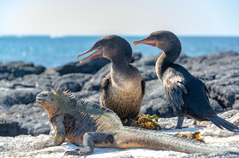 Las Islas Galápagos en Ecuador, un santuario estancado en el tiempo. (Foto: El País)