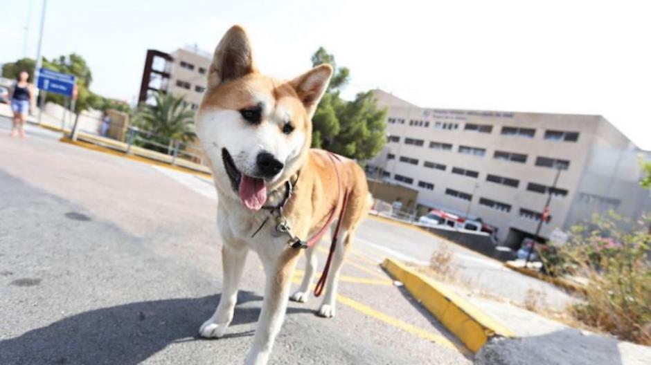 Maya lleva cuatro días fuera del hospital de Alicante en espera de su dueña Sandra. (Foto: 20minutos.es)