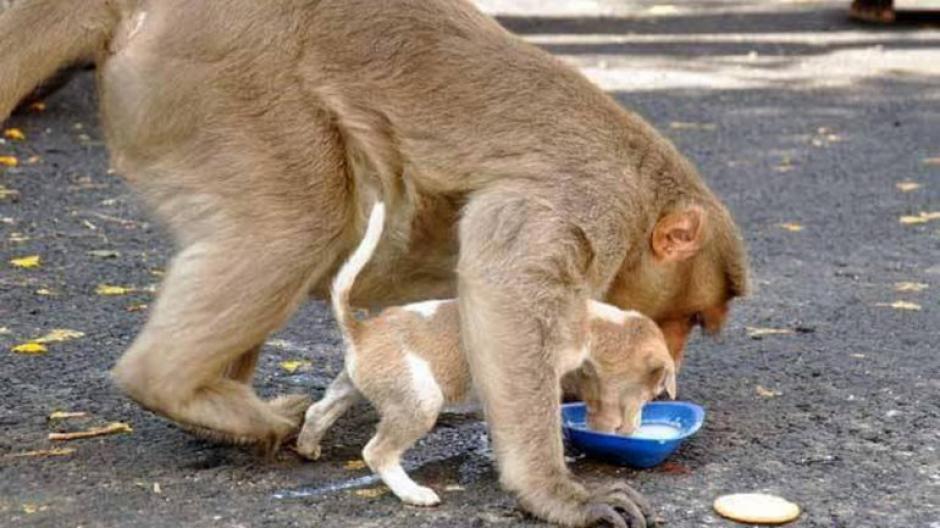 El mono cuida que su mascota se alimente correctamente. (Foto: infobae)