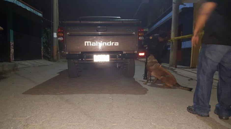 Laika es una agente canina de raza Pastor Malinois de cinco años de edad que ha destacado en grandes decomisos durante el 2015. (Foto: Policía Nacional Civil)