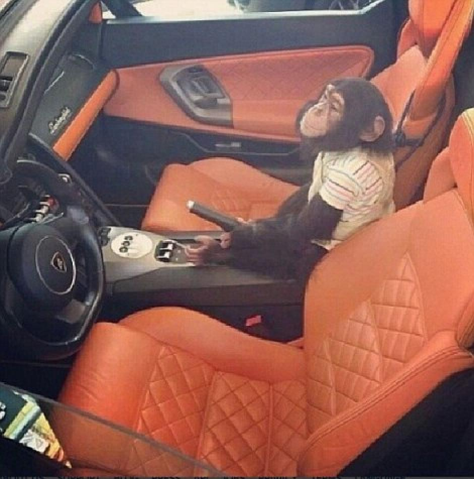 Un pequeño chimpancé es fotografiado en un lujoso auto, presuntamente propiedad de uno de los hijos del Chapo Guzmán.