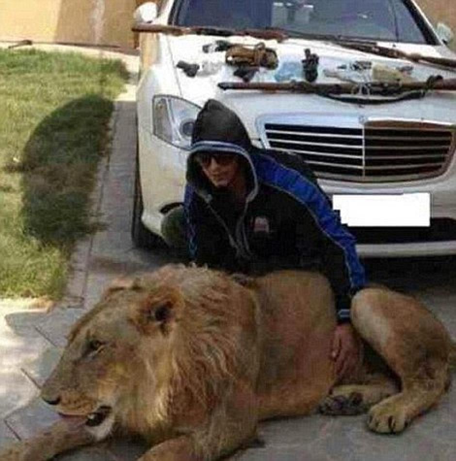 """Un león adulto, un auto de lujo y un """"hijo de papi narco"""" aparecen en esta imagen."""
