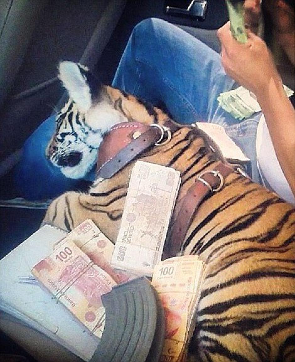 Cachorros de tigre y otras especies exóticas son las favoritas de los narcotraficantes.