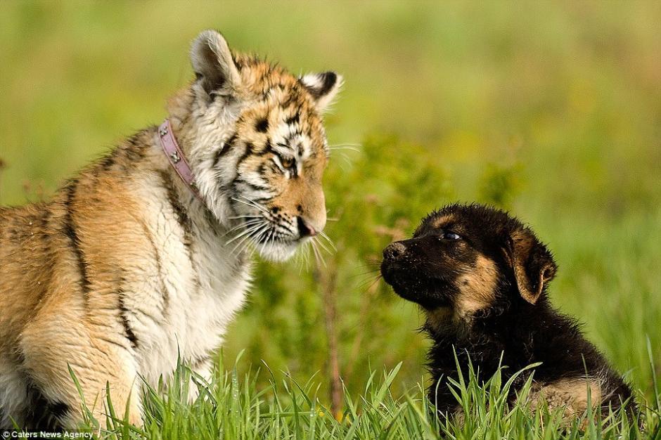Suria y Hugo se conocieron hace unos dos años. (Foto: DailyMail)