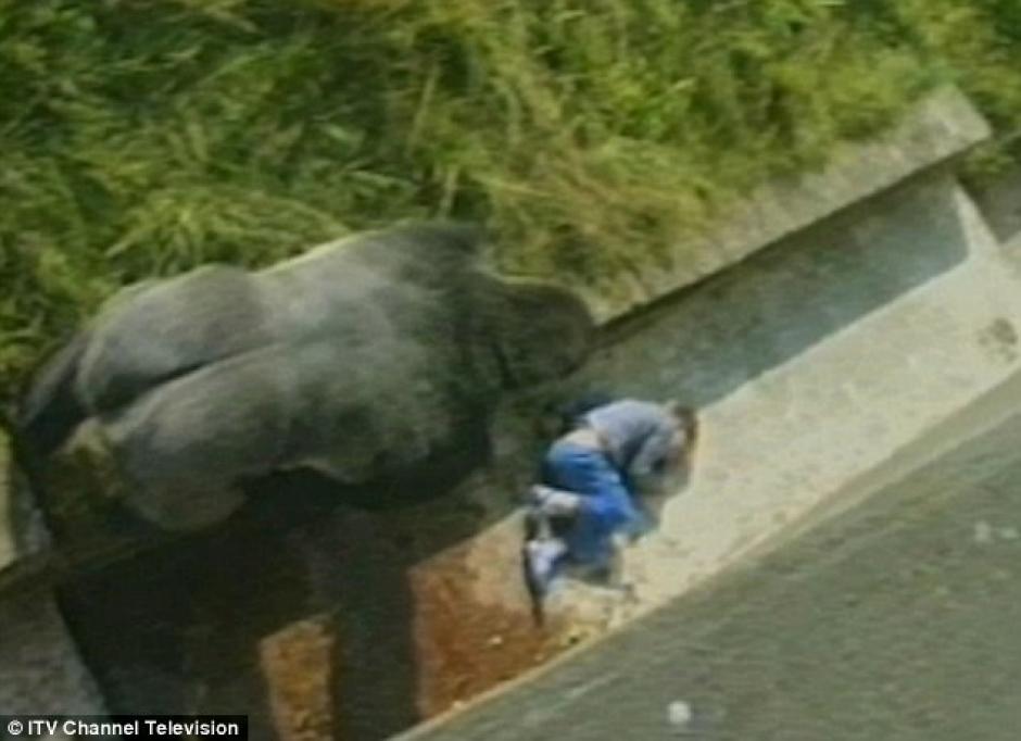 Jambo se acerca al niño que se cayó y quedó inconsciente. (Foto: Daily Mail)