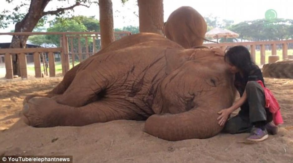 Se queda dormido al escuchar una canción de cuna de su cuidadora Lek.  (Foto: Captura de Pantalla/YouTube)