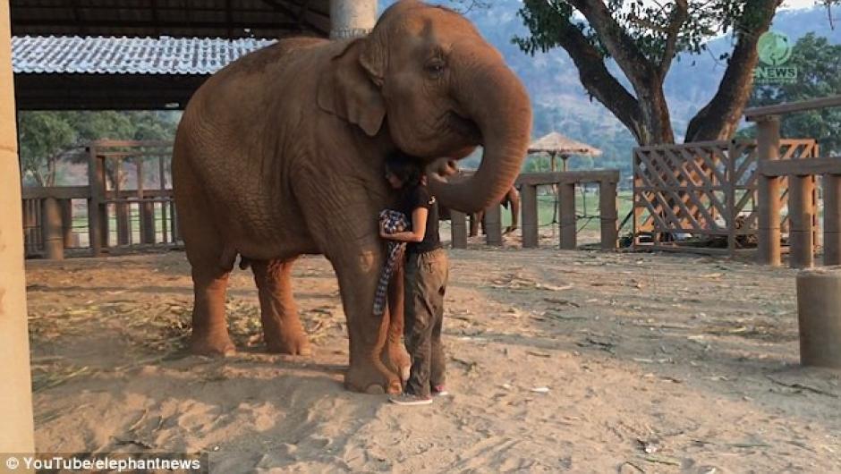 Lek tiene una relación positiva con el elefante y ha estado ayudándolo a dormir durante años. (Foto: Captura de Pantalla/YouTube)