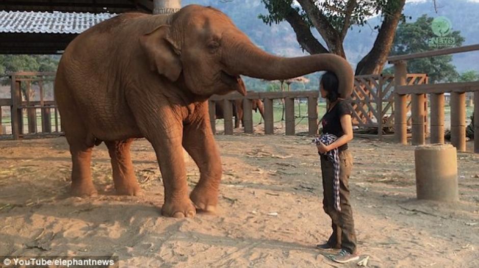 Es un mamífero grande de más de 5 toneladas (Foto: Captura de Pantalla/YouTube)