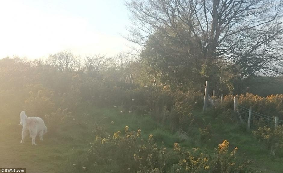 El hombre tomó esta fotografía en una campiña en Gales. (Foto: dailymail.co.uk)