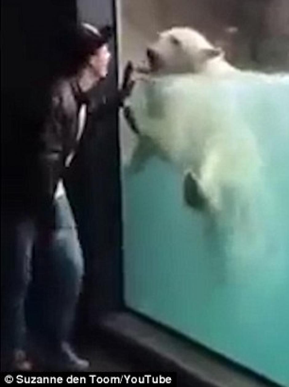 Un adorable oso polar imita los movimientos de un turista. (Foto: dailymail.co.uk)
