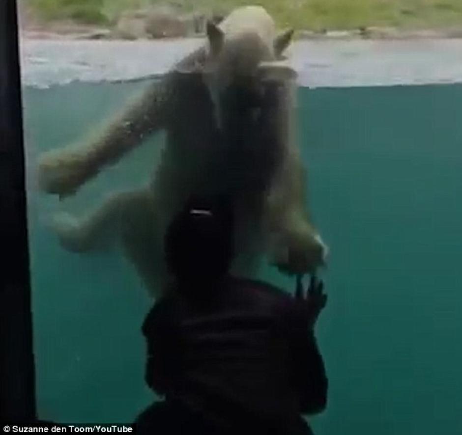 El oso imita todos sus movimientos. (Foto: dailymail.co.uk)