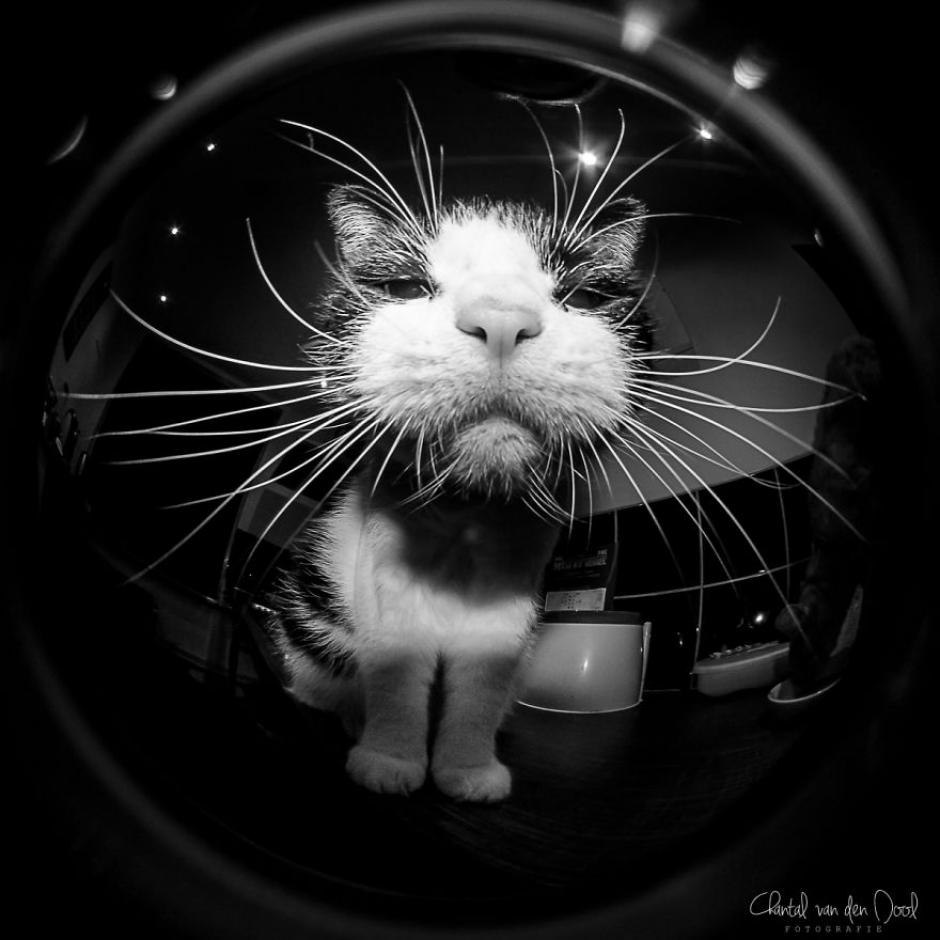 La curiosidad del felino hizo posible esta imagen con un lente ojo de pez. (Foto: Chantal van den Dool)