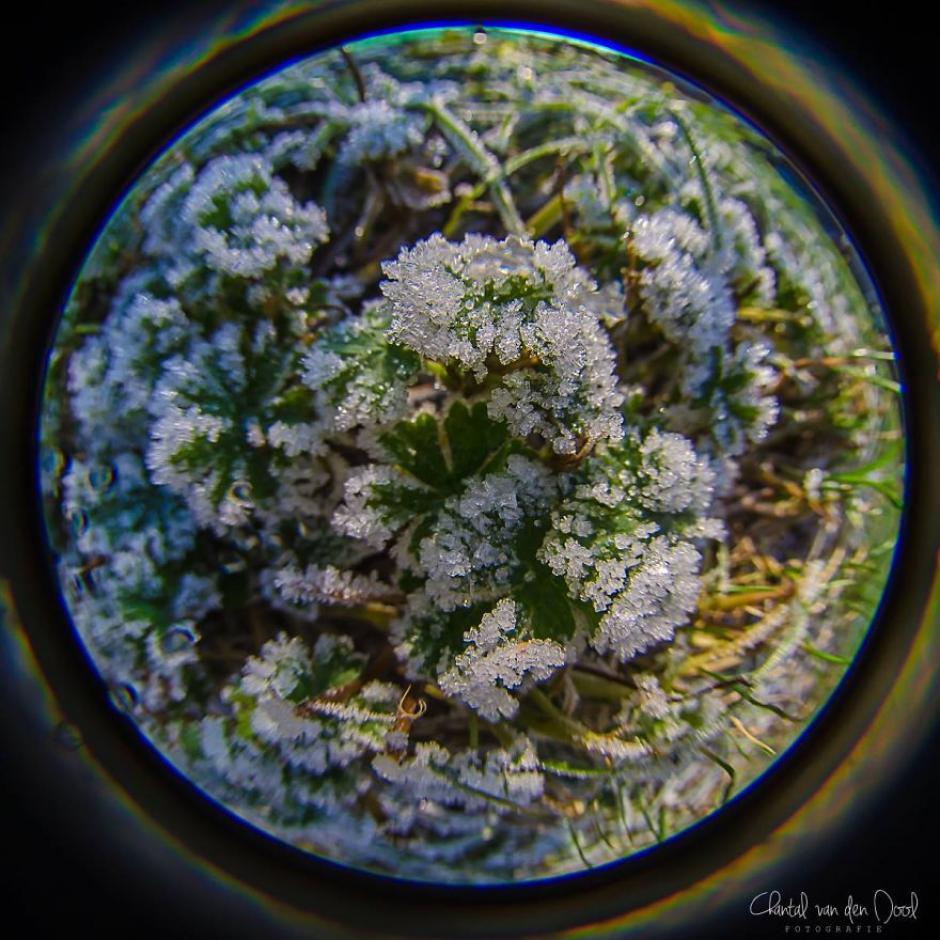 Hasta un día con escarcha sobre el pasto es un buen motivo para crear una fotografía. (Foto: Chantal van den Dool)