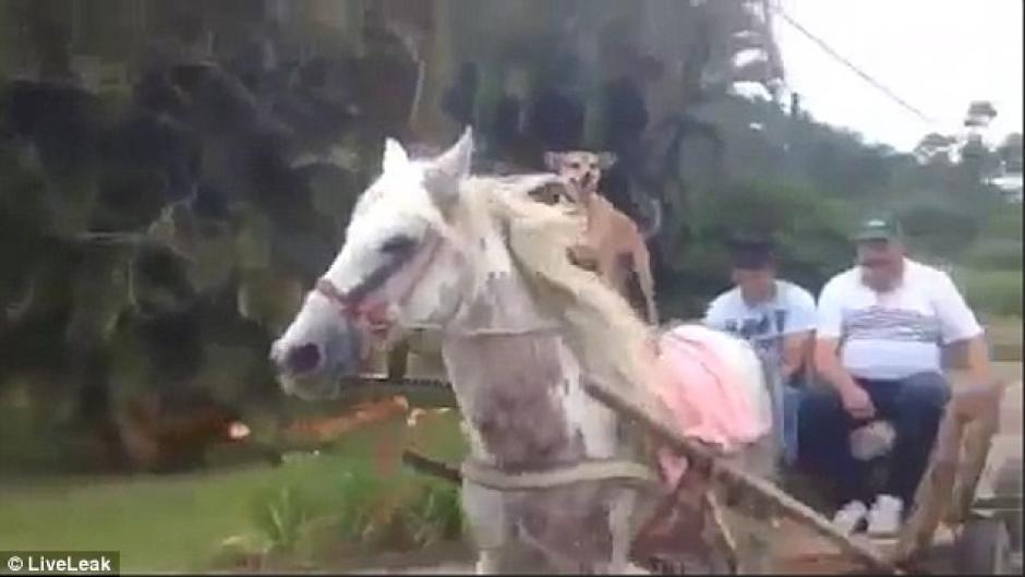Un perro montado en un caballo causa sensación en redes. (Imagen: Captura de pantalla)