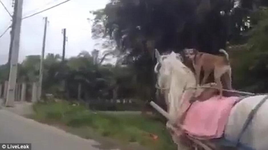 El video fue tomado en un camino rural en Brasil. (Imagen: Captura de pantalla)