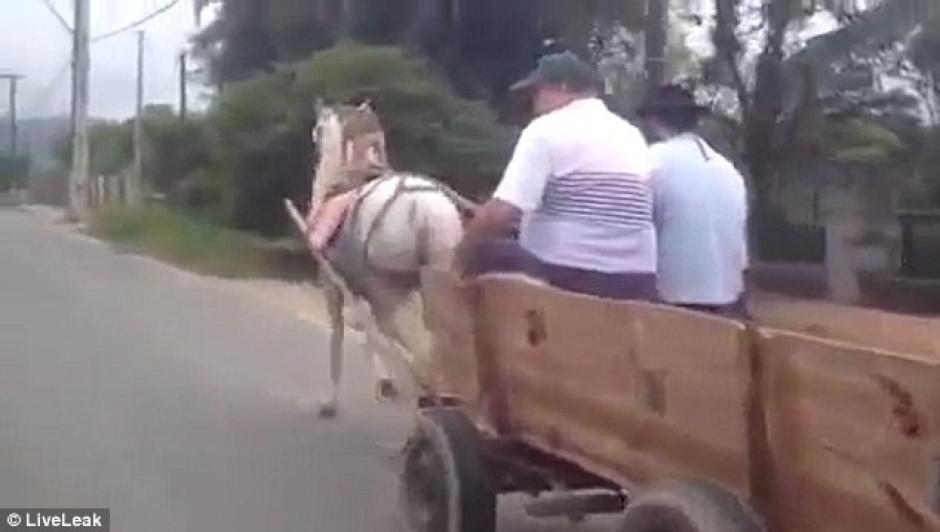 El perro y el caballo iban acompañados por sus amos. (Imagen: Captura de pantalla)