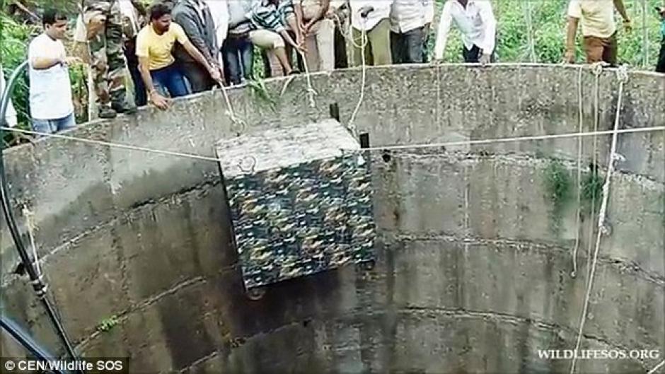 Los aldeanos tuvieron paciencia para rescatarlo. (Foto: dailymail.co.uk)