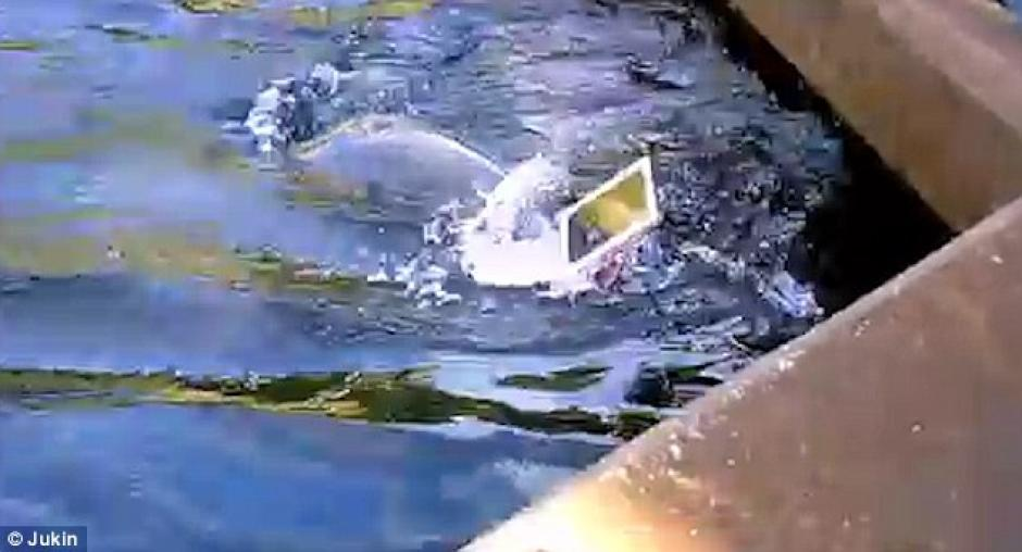 Un delfín le arrebató un iPad a una visitante en SeaWorld. (Foto: dailymail.co.uk)