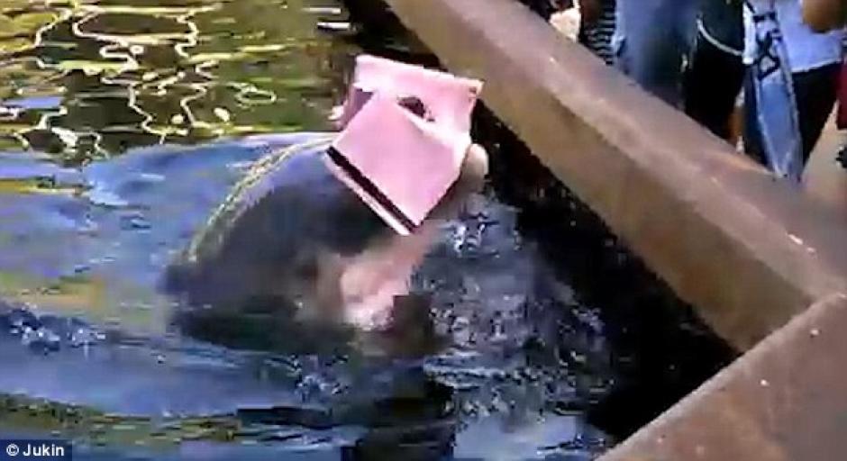 La mujer no pudo hacer nada y solamente vio como su iPad llegaba al agua. (Foto: dailymail.co.uk)