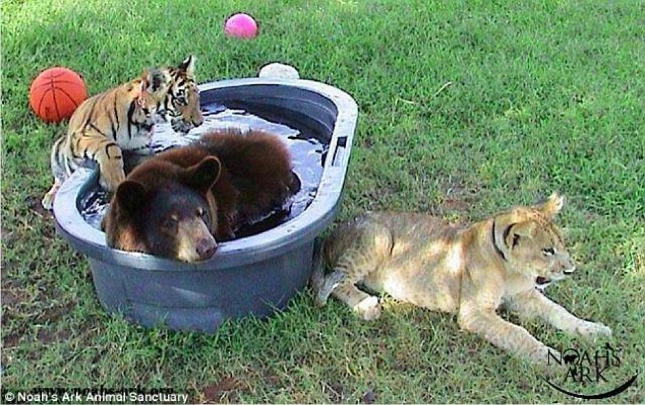 Compartieron juntos en la misma reserva natural. (Foto: dailymail.co.uk)