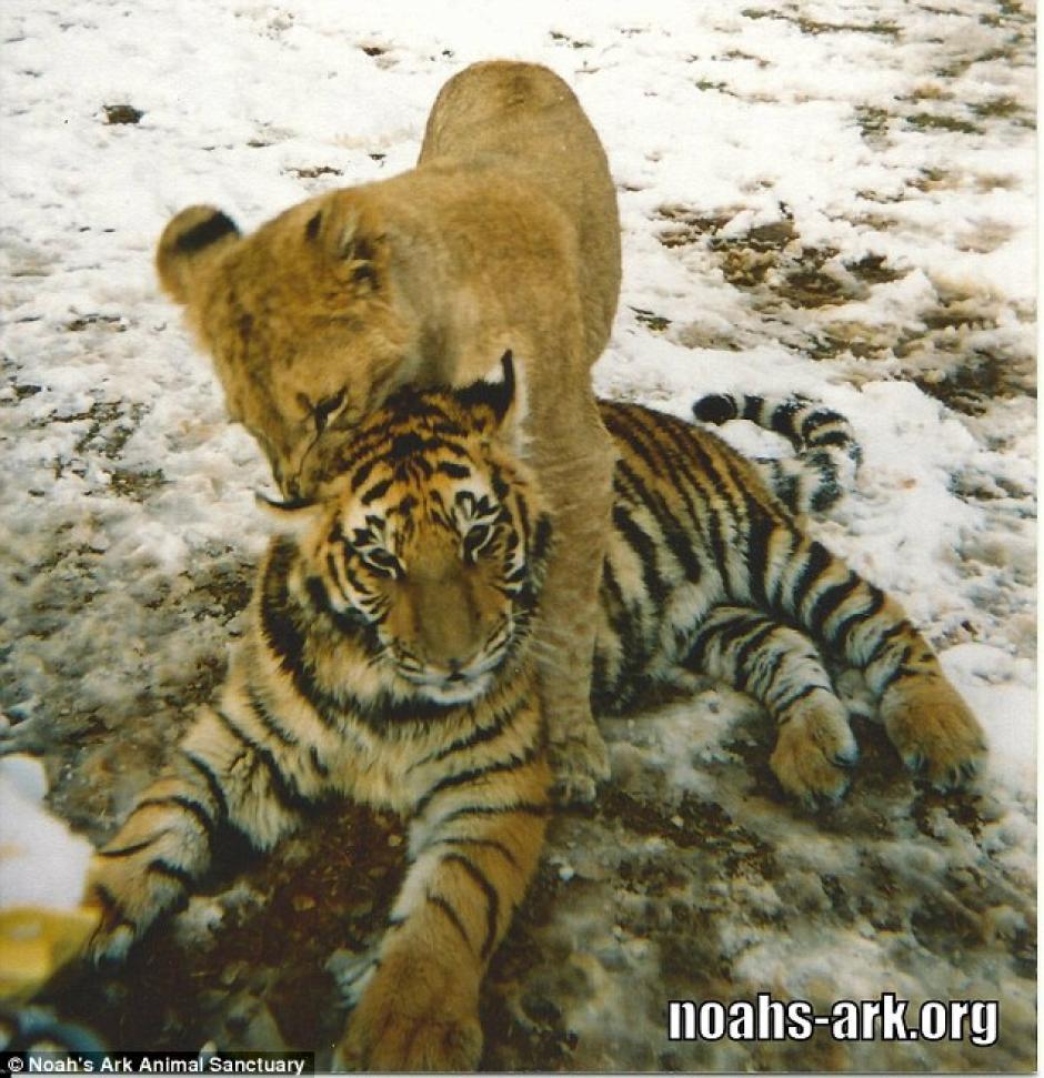 Los animales fueron rescatados de una propiedad perteneciente a un narcotraficante. (Foto: dailymail.co.uk)