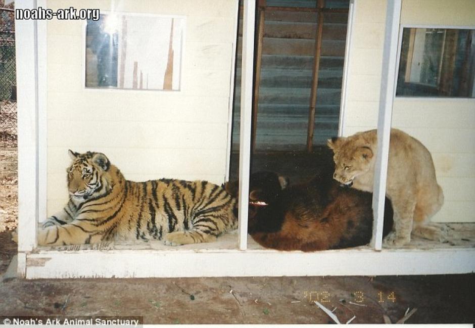 Los tres animales pasaban las horas juntos desde hace años. (Foto: dailymail.co.uk)