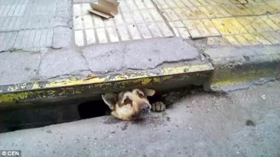 El perro permanecía atrapado en el tragante. (Foto: dailymail.co.uk)