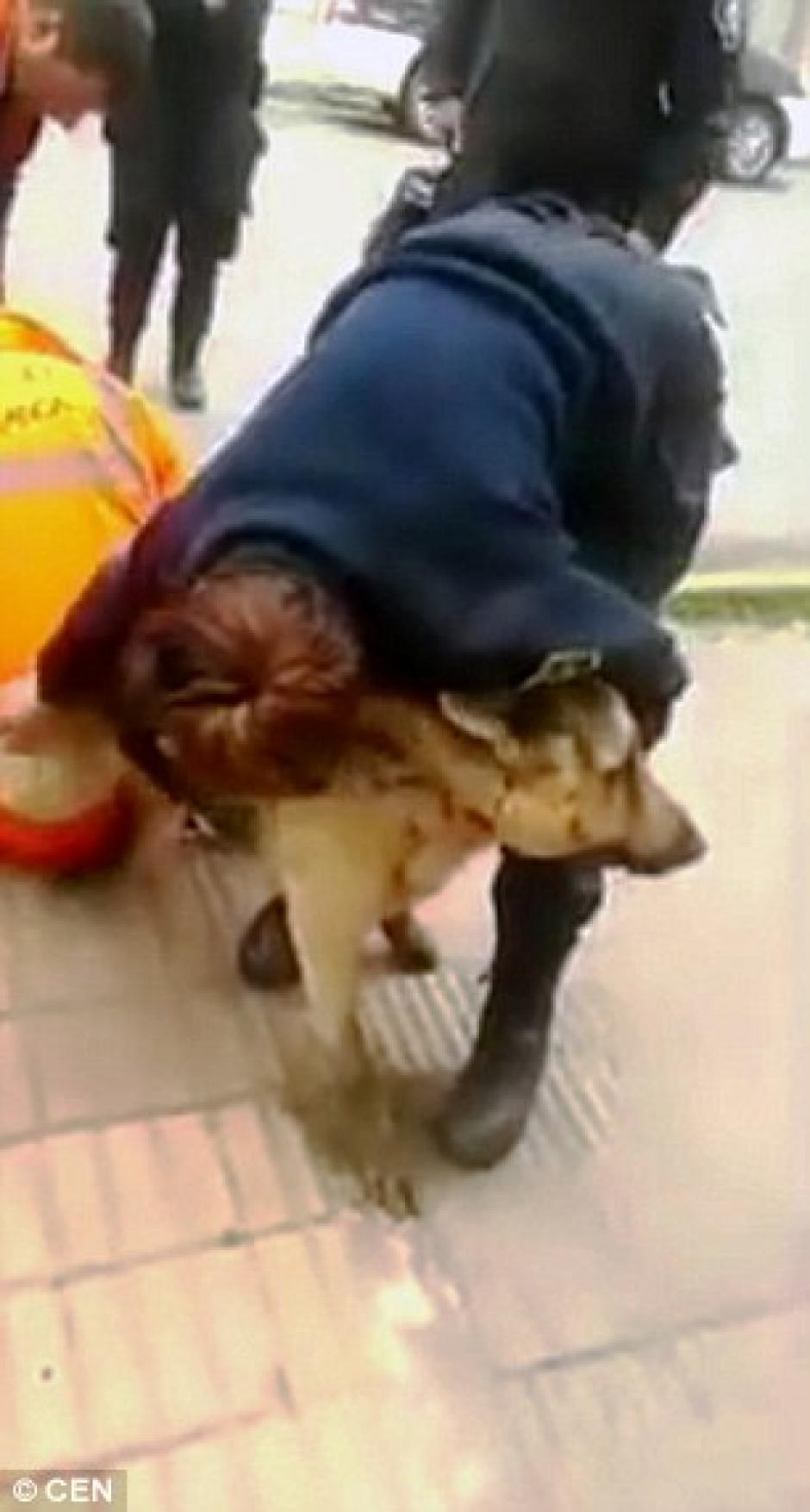 Las autoridades ahora se encargaran de cuidar al perro. (Foto: dailymail.co.uk)