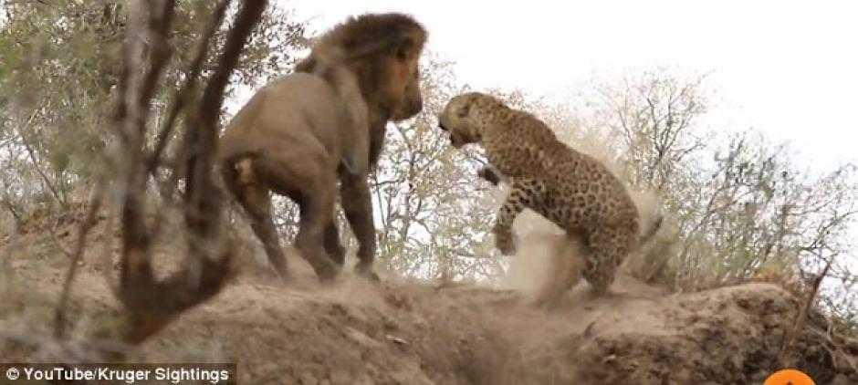 Pero en el último segundo, la víctima reacciona y logra defenderse. (Imagen: captura de YouTube)