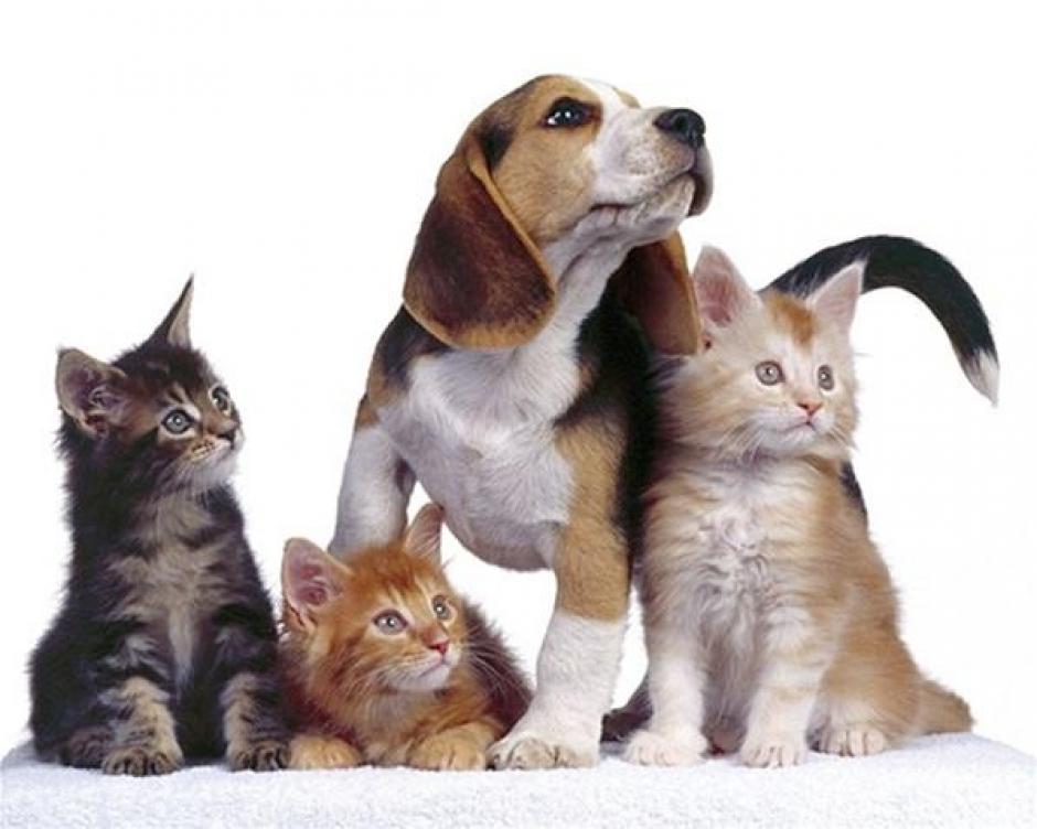 Recuerda que la mascota es un miembro más de la familia.(Foto: Pinterest)