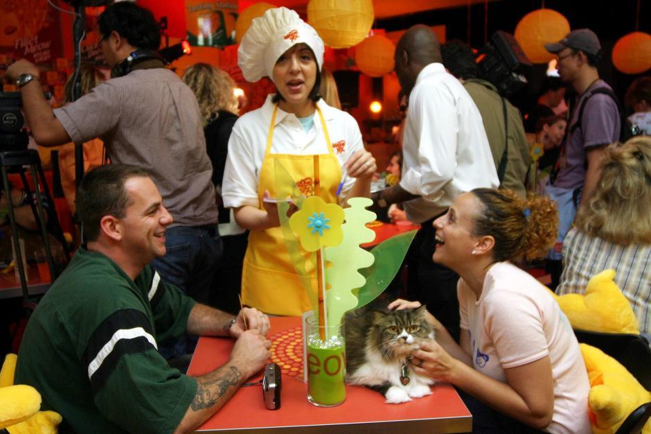 Las normas de 'La Gatoteca' están pensadas para el bienestar de sus inquilinos gatunos. (Foto: EFE)