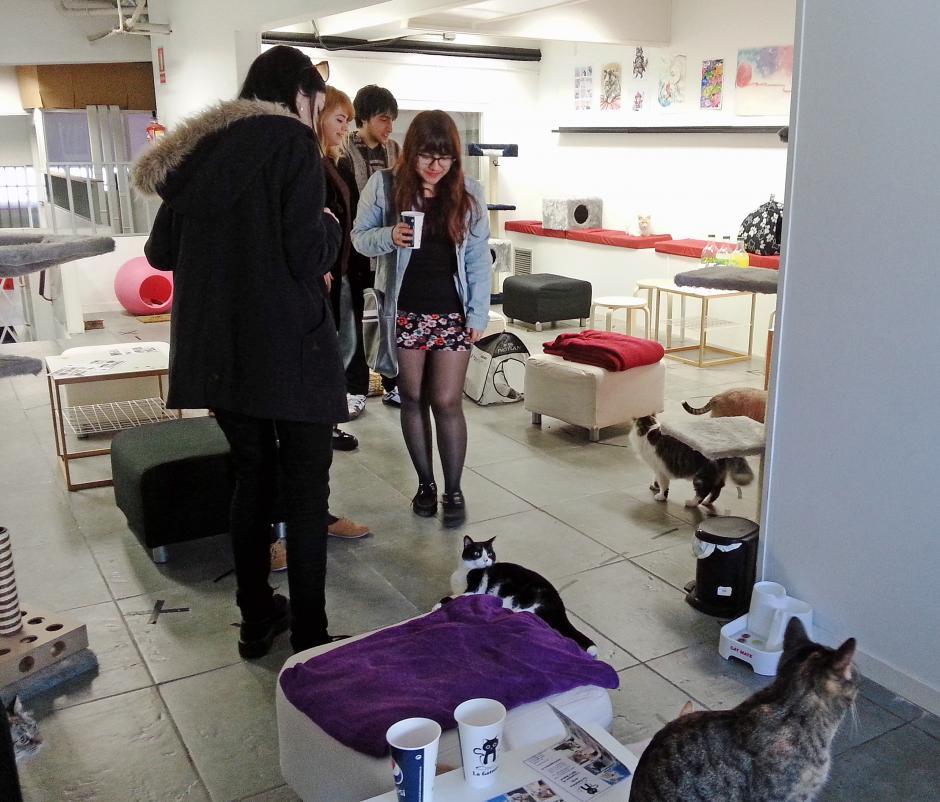 Estos locales están pensado para los clientes que no tienen tiempo de tener sus propias mascotas pero quieren disfrutar de su compañía. (Foto: EFE)