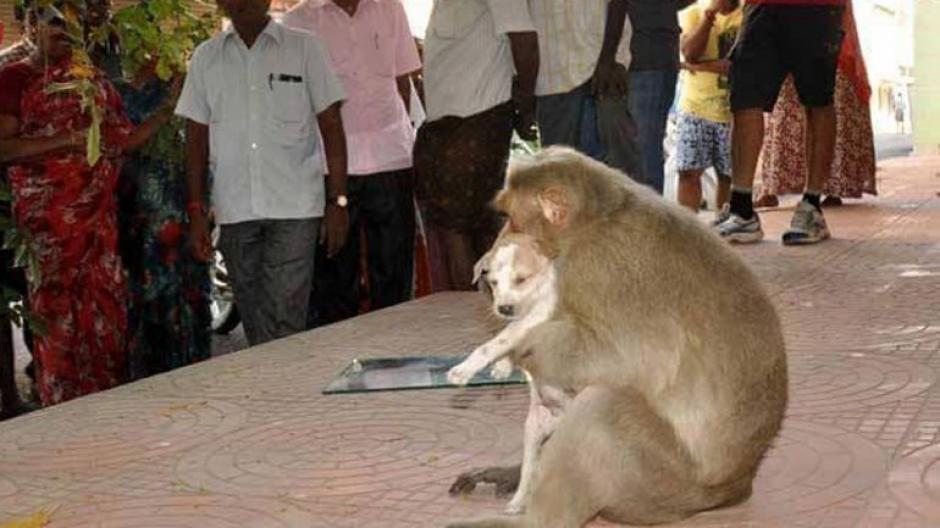 El tierno acontecimiento tuvo lugar en la India. (Foto: infobae)