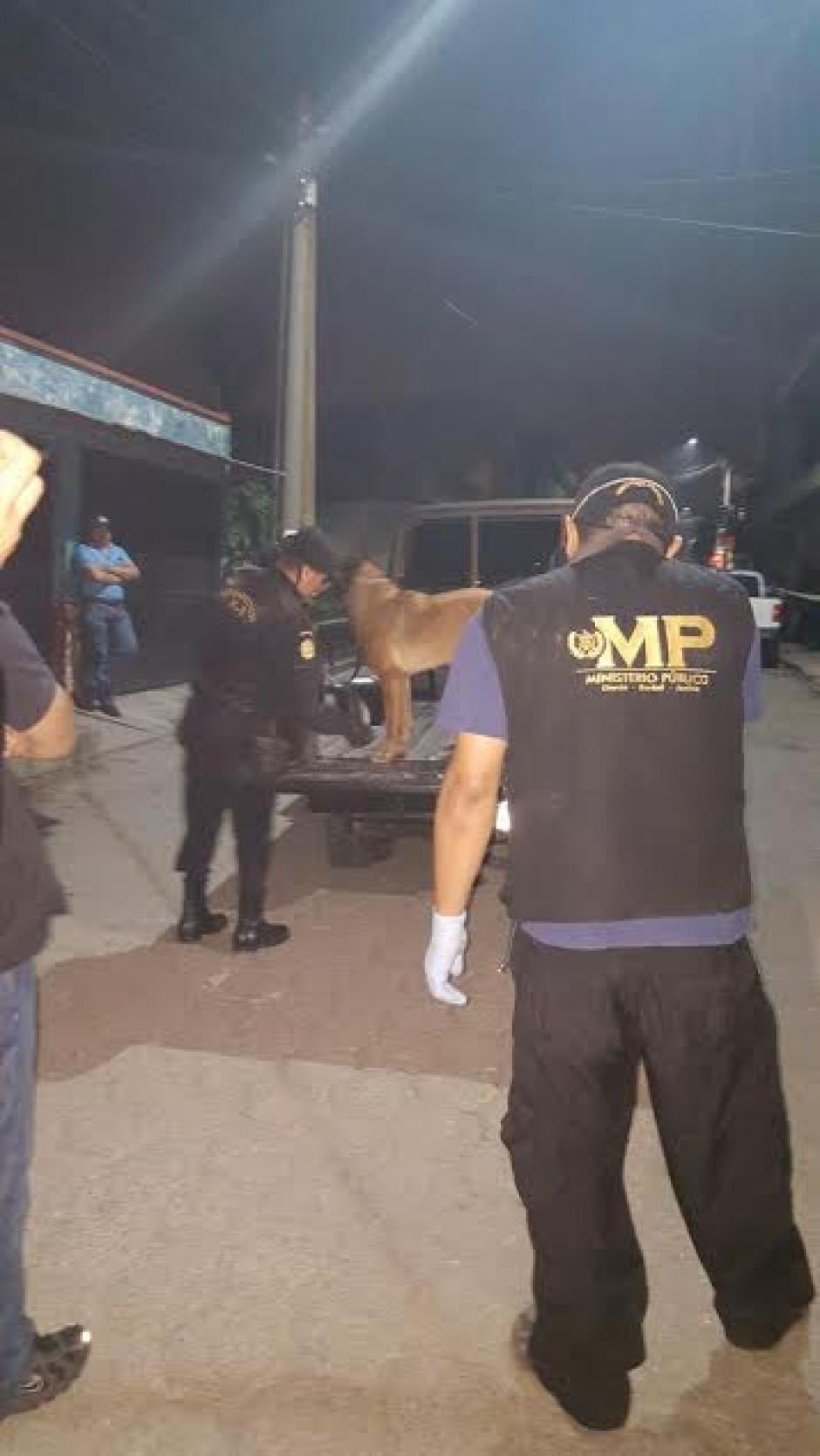 La agente canina Laika se especializa en localizar papel moneda y narcóticos. Este año participó en varios decomisos importantes. (Foto: Policía Nacional Civil)