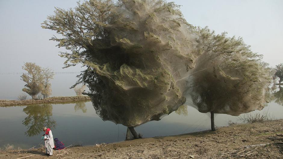 """La """"lluvia"""" de arañas sorprende cada año a un pueblo en Australia. (Foto: RT)"""