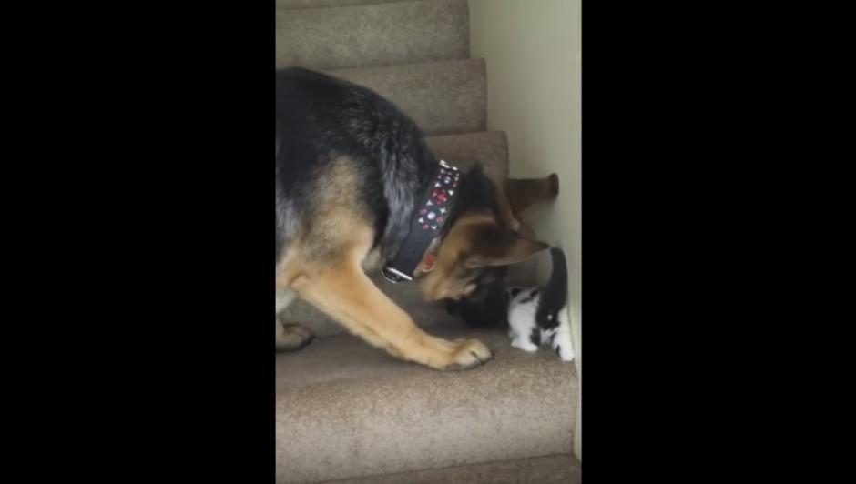 El perro toma con fuerza, pero sin lastimar al minino por el cuello para ayudarlo. (Captura Youtube)