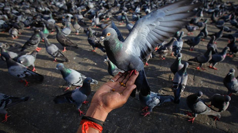 Las aves recibían un trato no adecuado mientras eran transportadas en un camión sospechoso. (Foto: RT)