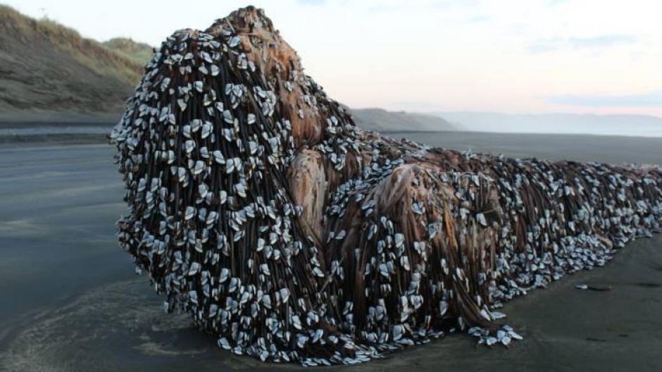 Algunos al ver esta imagen lo describieron como un monstruo marino con rastas. (Foto: Facebook, Melissa Doubleday)