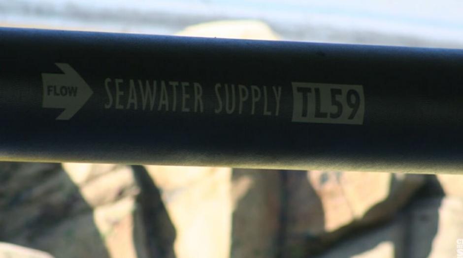 """Es la misma inscripción que tiene una tubería en el paseo submarino de """"Buscando a Nemo """". (Foto: Captura YouTube)"""