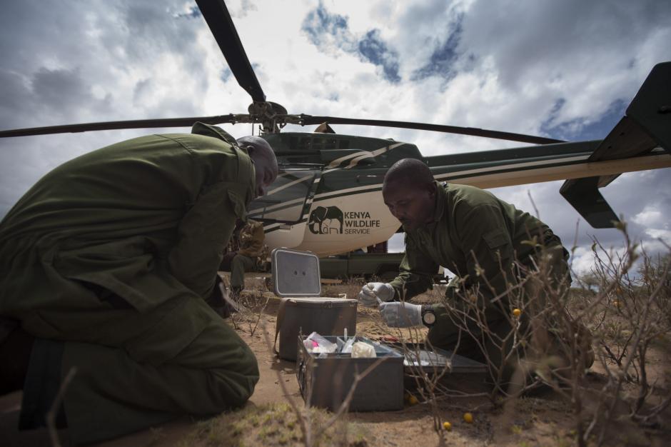 Veterinarios del Servicio de Conservación de la Flora y Fauna de Kenia (KWS) preparan dispositivos de localización (GPS) para elefantes, cerca de Kajiado, al norte de Nairobi (Kenia), el 3 de diciembre de 2013. La instalación de estos dispositivos permite al KWS y a los veterinarios monitorizar los movimientos de los animales para luchar contra la caza furtiva. (Foto: Dai Kurokawa/EFE)