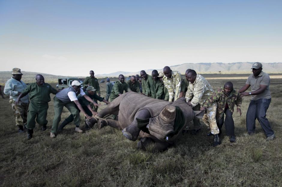 La fuerzas armadas están comprometidas con la preservación de los mamíferos gigantes. (Foto: Dai Kurokawa/EFE)