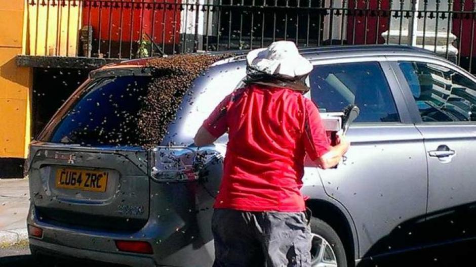 Una asociación de apicultores ayudó a quitar al enjambre. (Foto: diariopanorama.com)