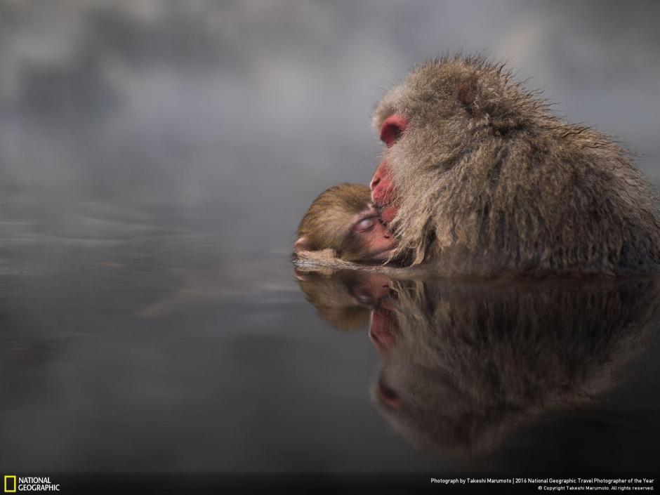 La  fotografía fue captada por Takeshi Marumoto en Nagano, Japón, participa en el categoría, naturaleza.
