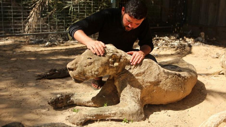 Mohammed Awaida, propietario de zoológico,  exhibe los animales luego que estos murieran durante ataques contra terroristas. (Foto: infobae)