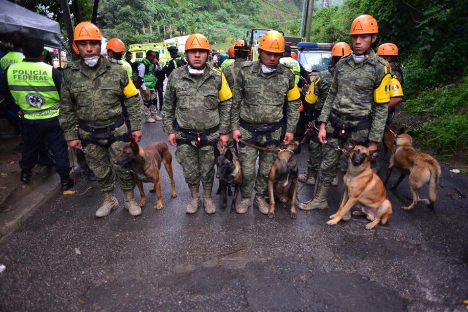 El equipo canino de rescate provenientes de México junto a sus adiestradores, previo al inicio de labores de búsqueda de víctimas.(Foto: Soy502/Jesús Alfonso)