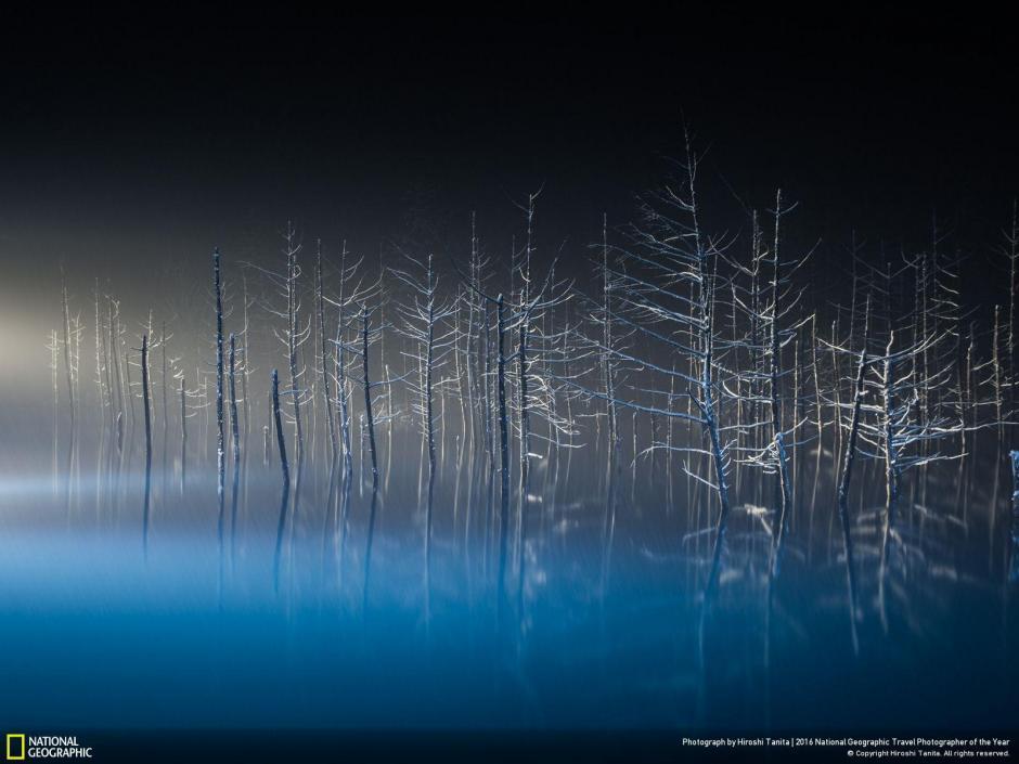 Esta imagen concursa para la categoría naturaleza, la localidad es Japón. (Foto: Hiroshi Tanita)