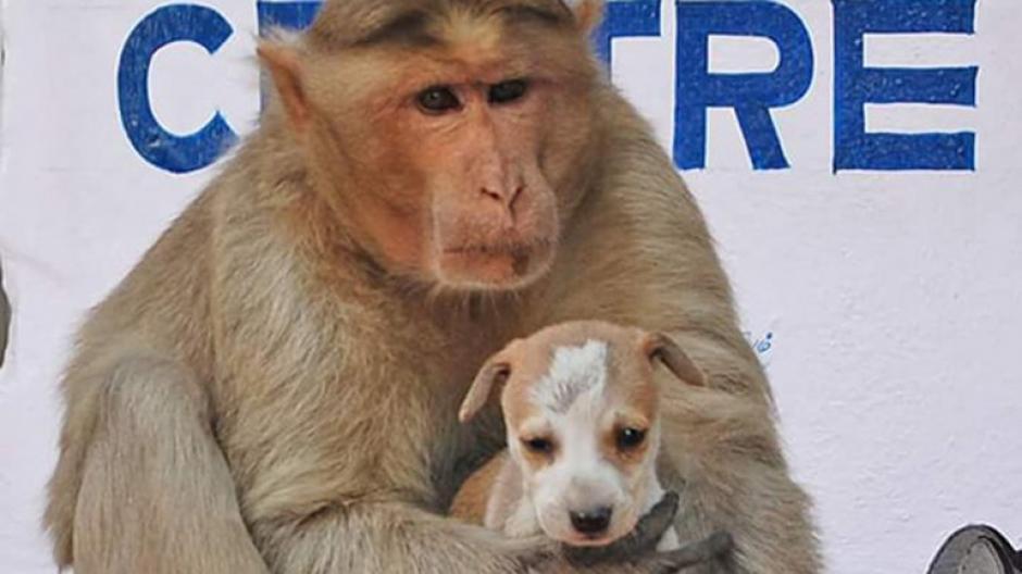Algunos habitantes del lugar proveen de alimentos a la inusual pareja de animales, donde el mono se asegura que primero se alimente el perro. (Foto: infobae)