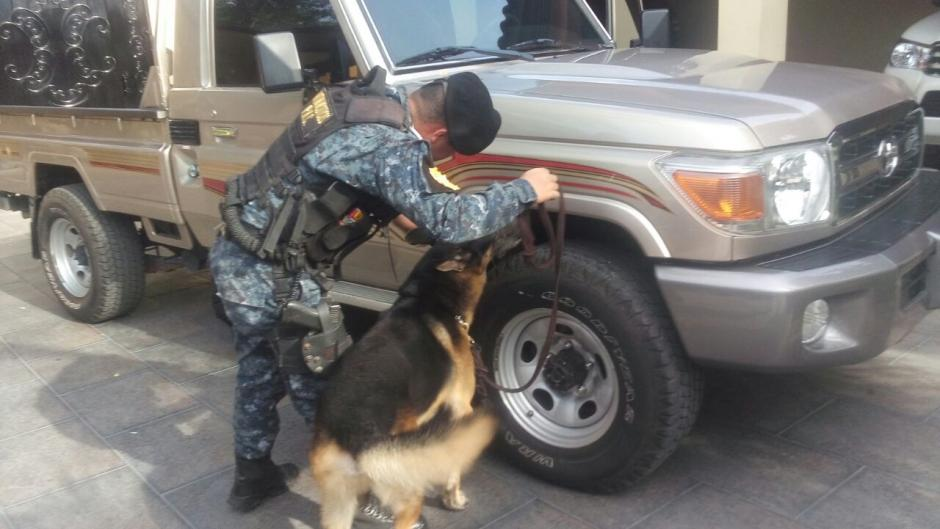 Un k-9 revisa uno de los vehículos que fue encontrado durante los allanamientos. (Foto: PNC)