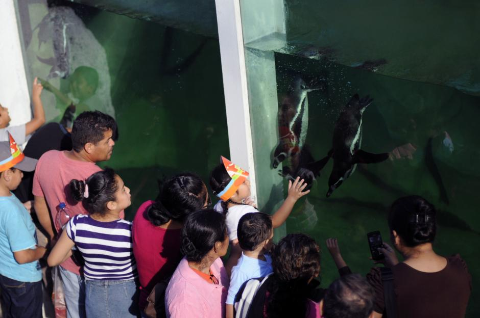 Un grupo se aglomera para ver a los pingüinos